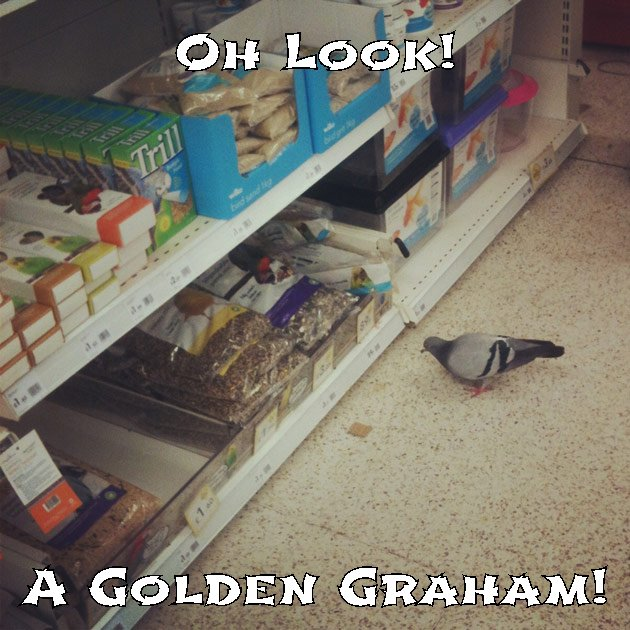 When you have a Golden Graham!