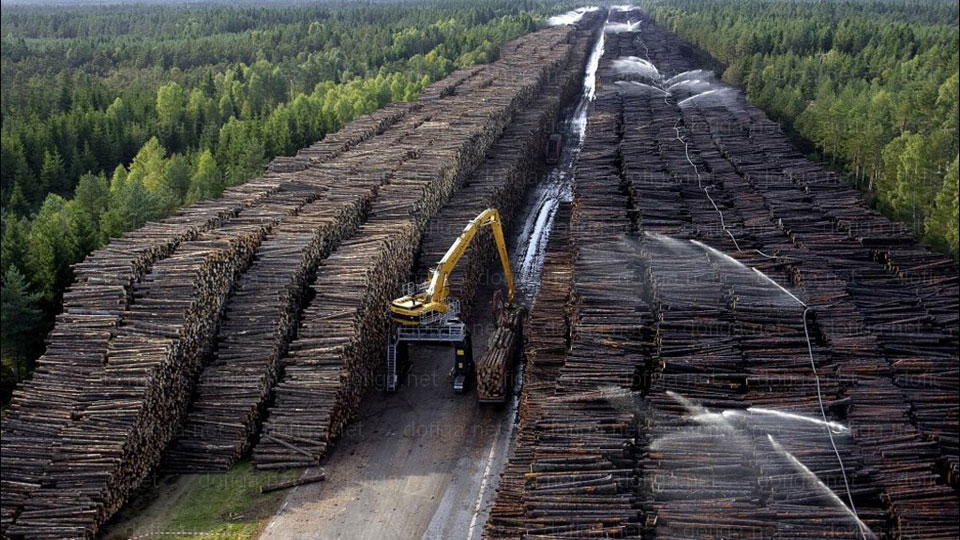 Biggest pile of logs in the World - Picture   eBaum's World