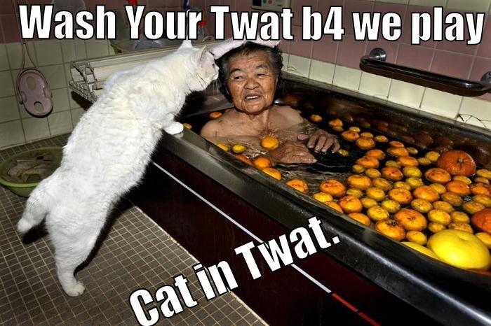 Twat cat.