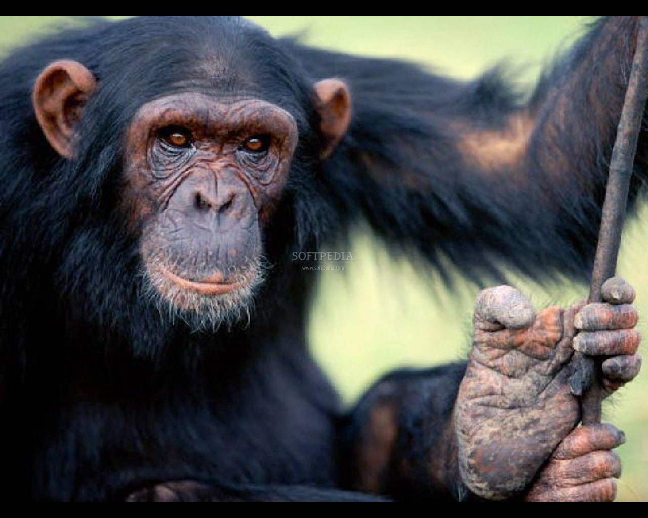 Apes,Monkeys......and a Stoopid Monkey - Gallery | eBaum's ...