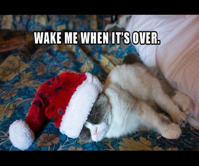 Funny Grumpy Cat Christmas Memes.2012 S Best Of Grumpy Cat Christmas Gallery Ebaum S World