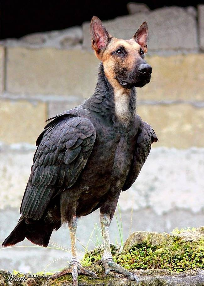 Image of: Field Trial 26 Dogs If They Had Bird Bodies Way Cool Dogs 26 Dogs If They Had Bird Bodies Gallery Ebaums World