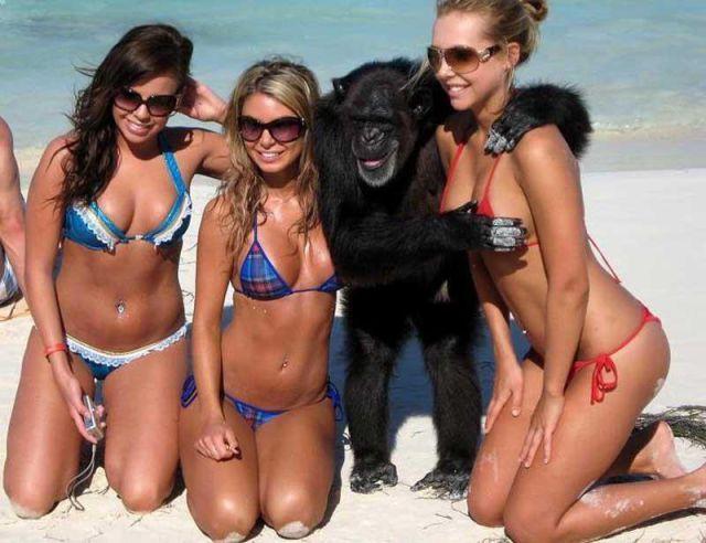 24 Beautiful Bikini Beach Shot Fails Gallery Ebaums World