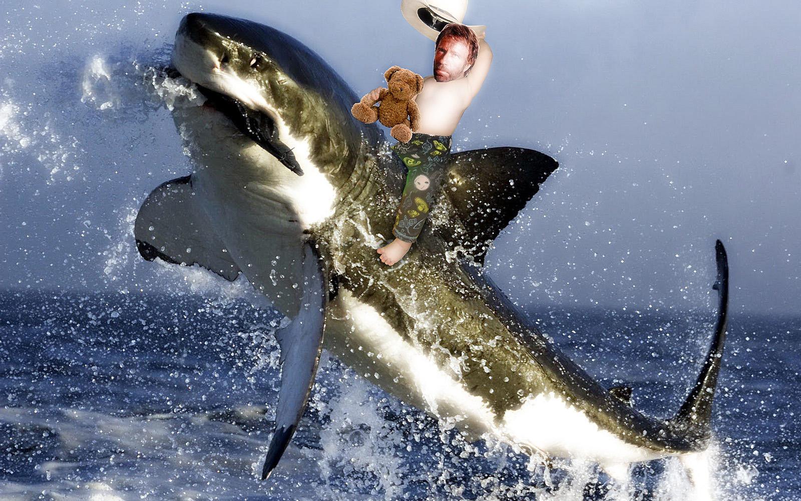 Chuck's Baby riding a white shark