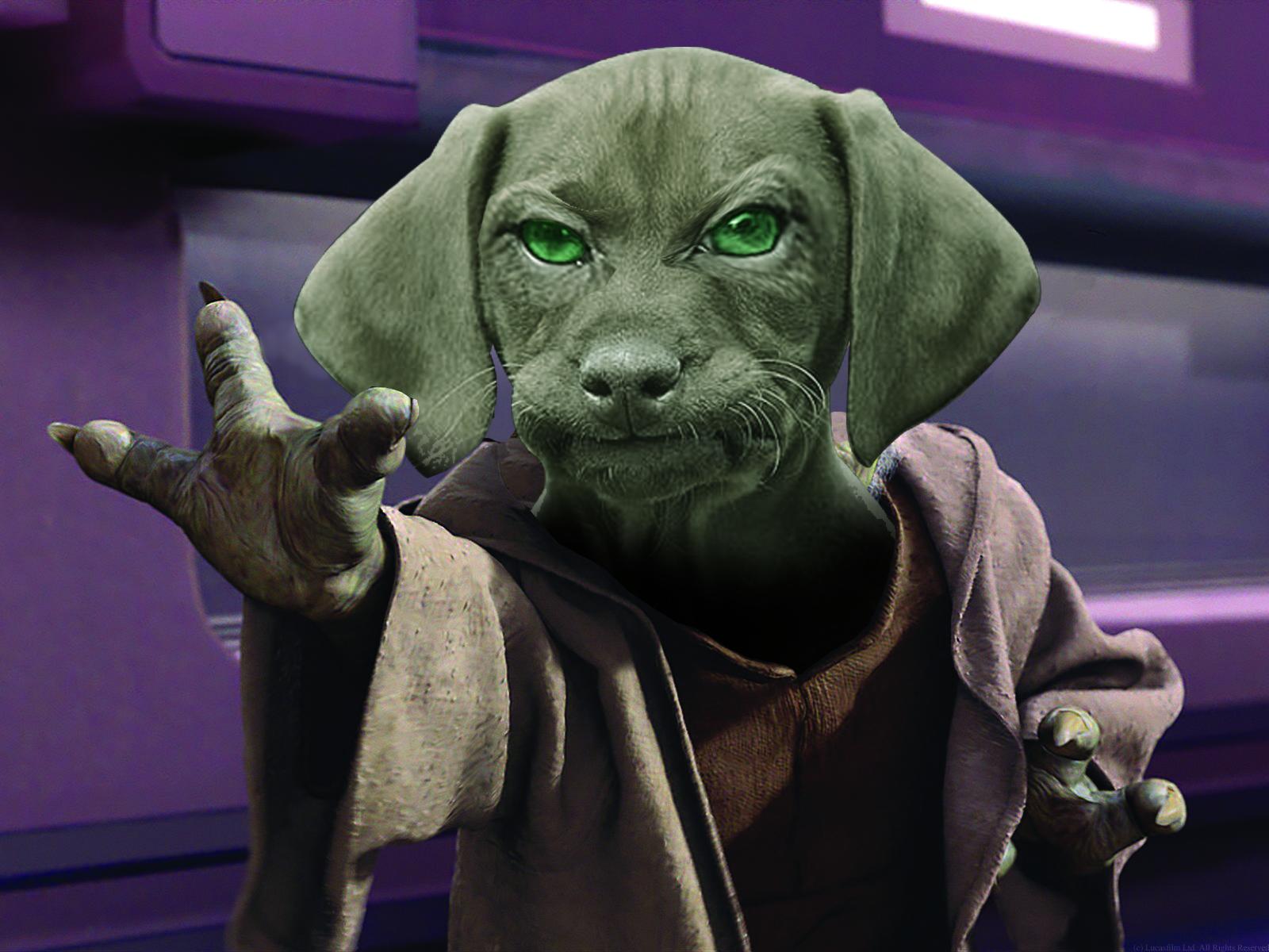 Yoda dawg