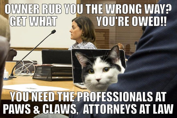 Has your owner rubbed you the wrong way? Get the treats you deserve today.  Dial 1 (800) PAW-CLAW for a free consultation.