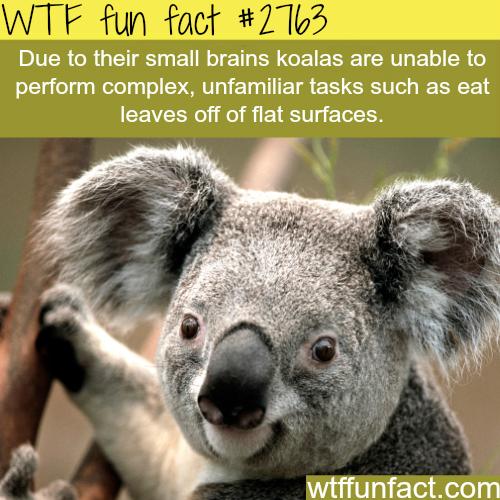 48 Wtf Fun Facts