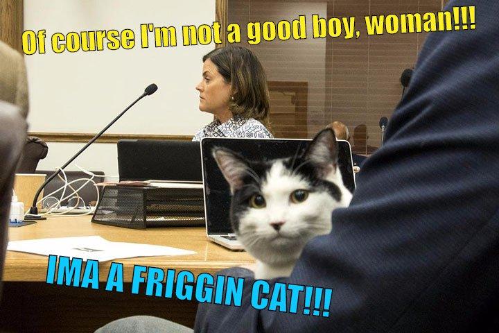 cat getting sued