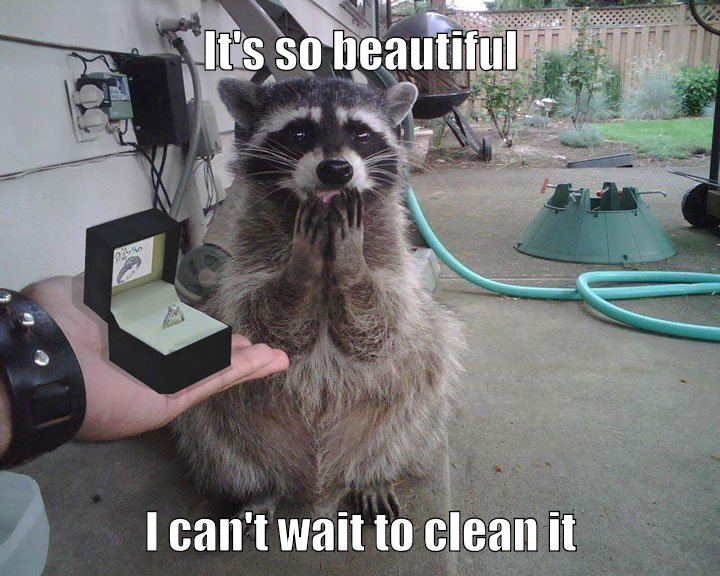 Because Raccoons always clean everything...ya know.