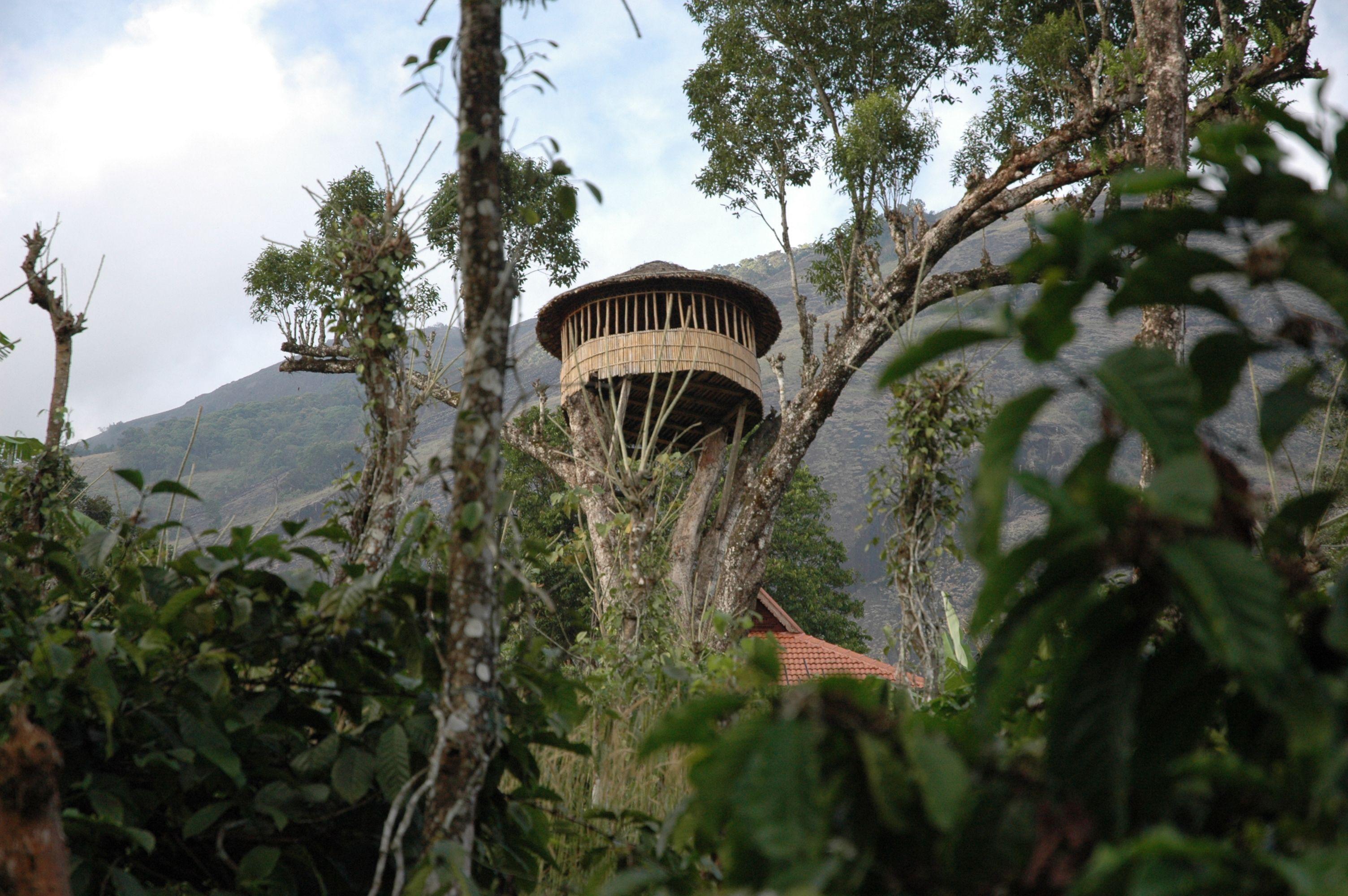 32 Sweet Tree Shanties - Wow Gallery | eBaum's World