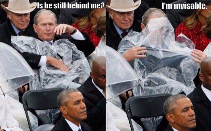 Stealth Bush