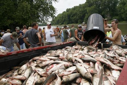 Harvesting asian carp