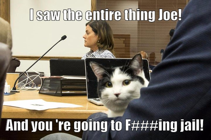 The cat knows.