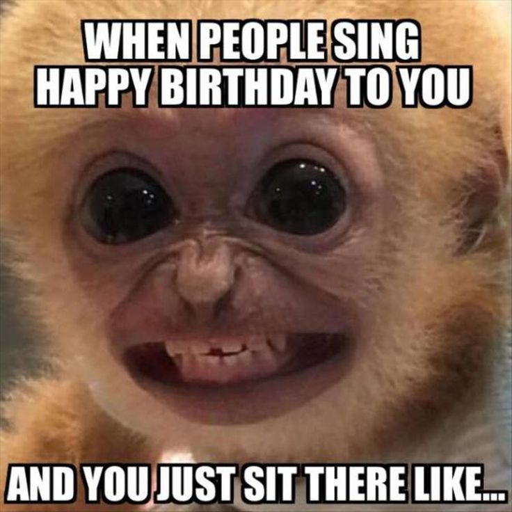 Funny Picture Of Monkey Showing A Forced Smile In How It Feels When People Sing Happy