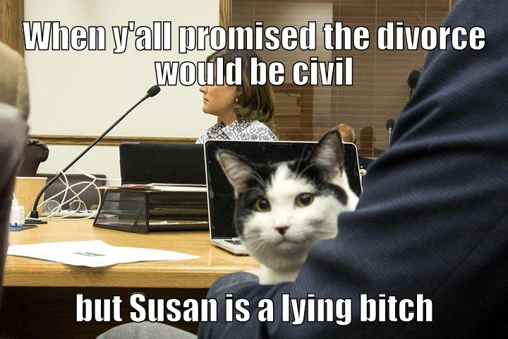 cat goes to divorce court with Susan, who is in fact a liar