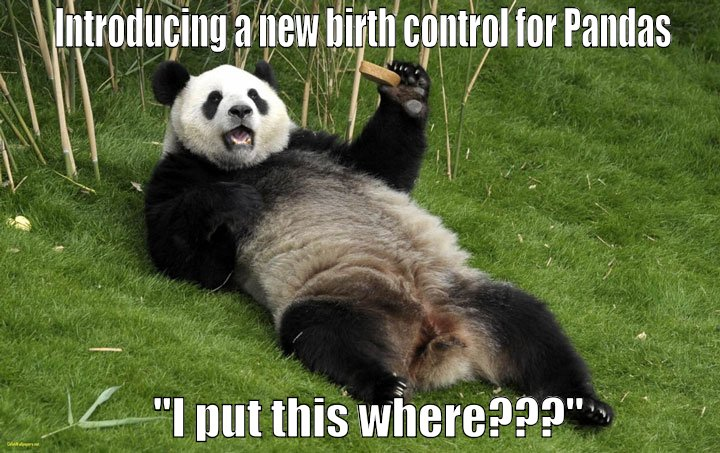 Pfizer introduces new panda contraceptive.  Pandas not happy.