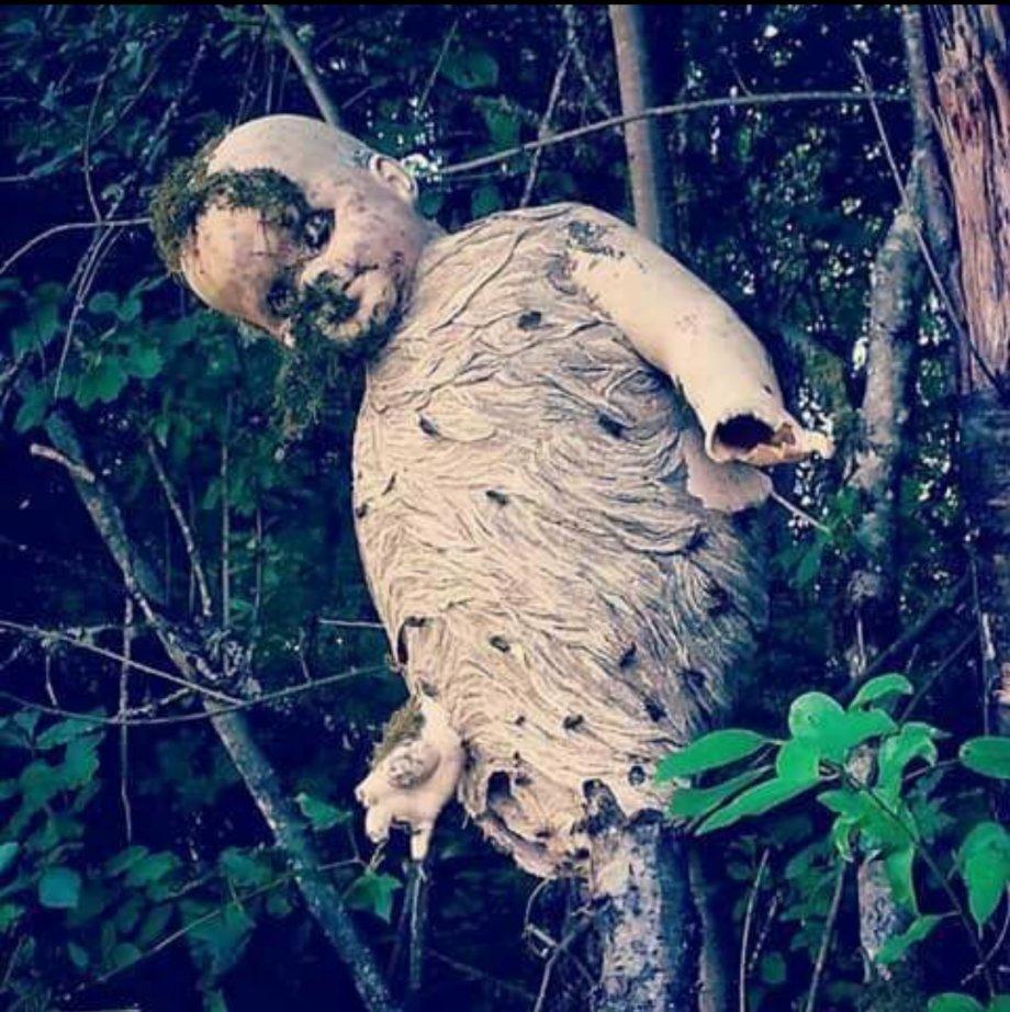 """Картинки по запросу """"wasp nest in doll"""""""
