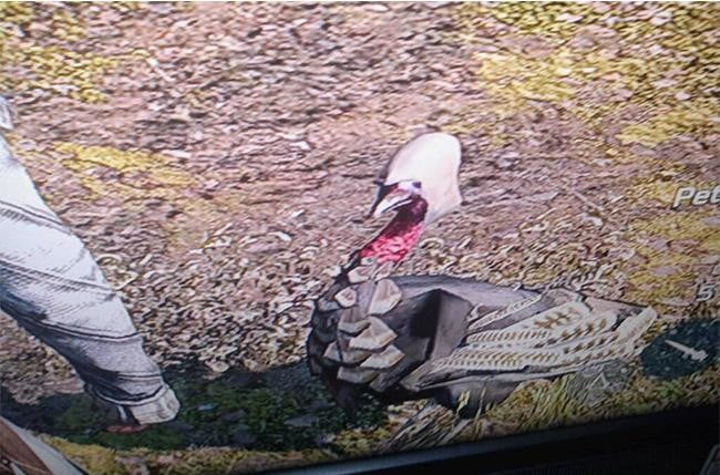 video game easter eggs - The Turkey Assassin