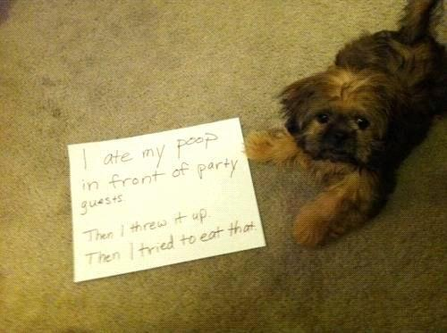 Letters from dogs! (Hilarious)   Gallery | eBaum's World