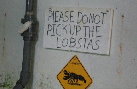 please do not pick them up