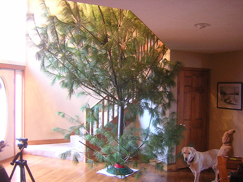 Ugly Christmas Tree.Ugly And Bizarre Christmas Trees Gallery Ebaum S World