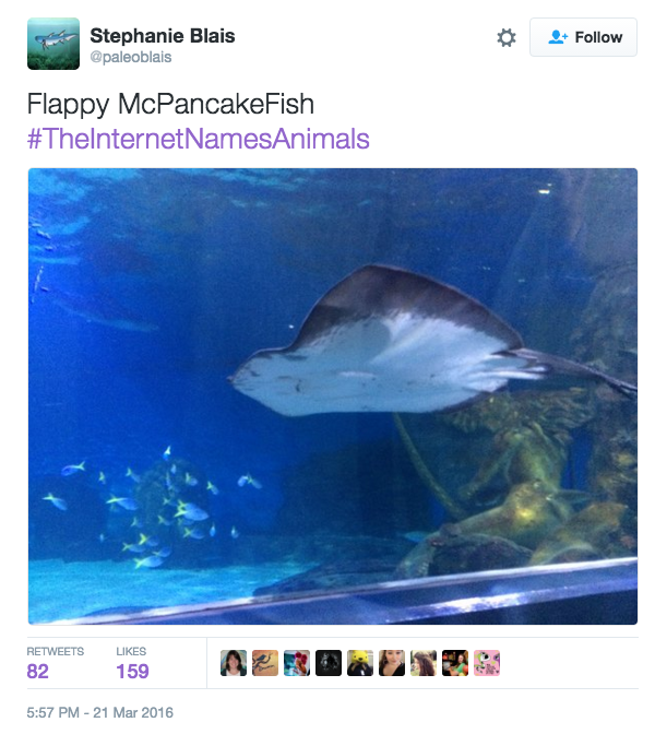 The Internet Takes a Crack at Naming Animals - Wow Gallery