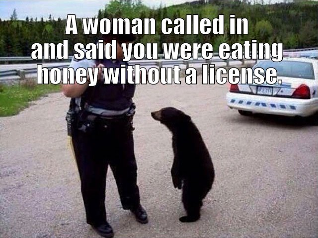 bear without license