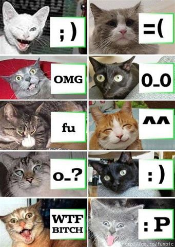 Cats say it all!