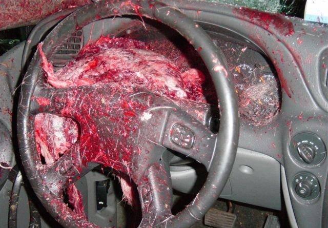 Aftermath of a Deer Strike - Gallery | eBaum's World