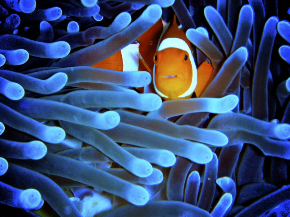 39 Stunning Photos Of Coral Reefs - Animals & Nature Gallery