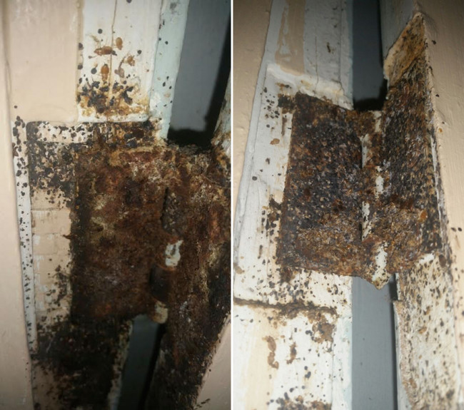 Mold In Apartment: What Was Found Inside This San Francisco Apartment