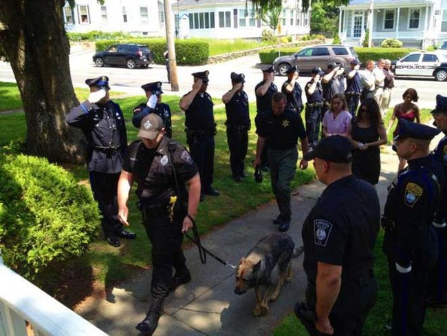 The Plymouth, Massachusetts Police Department saluting their K-9 officer on his way to the vet to be put down.