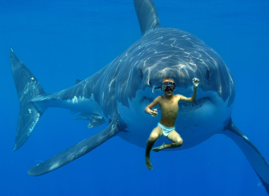 Lol, dont look now, BUT THERES A FUCKING MASSIVE SHARK BEHIND BILLY!