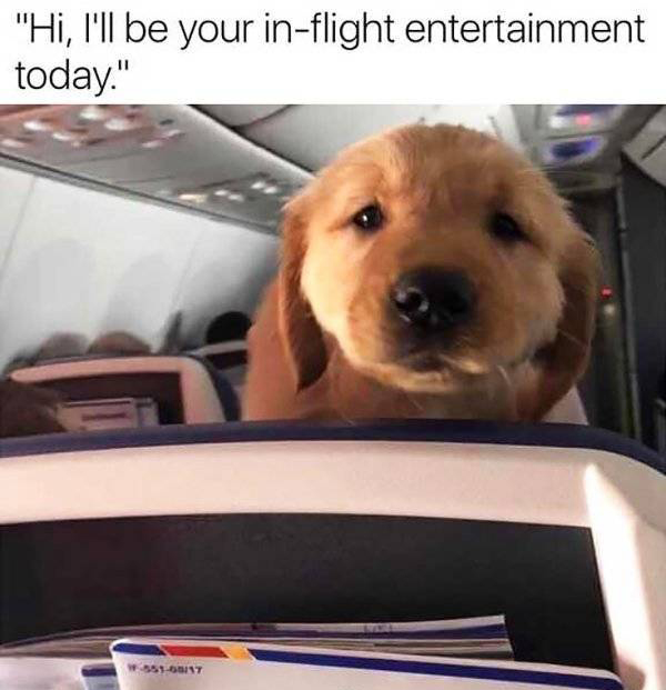 25 Airport Memes That Will Send You Flying - Gallery