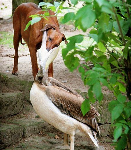 Give me my bone back you stupid bird!!
