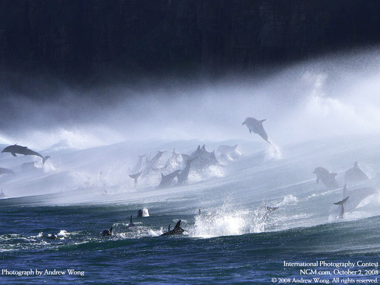 Beautiful Photograph of Dolphins.