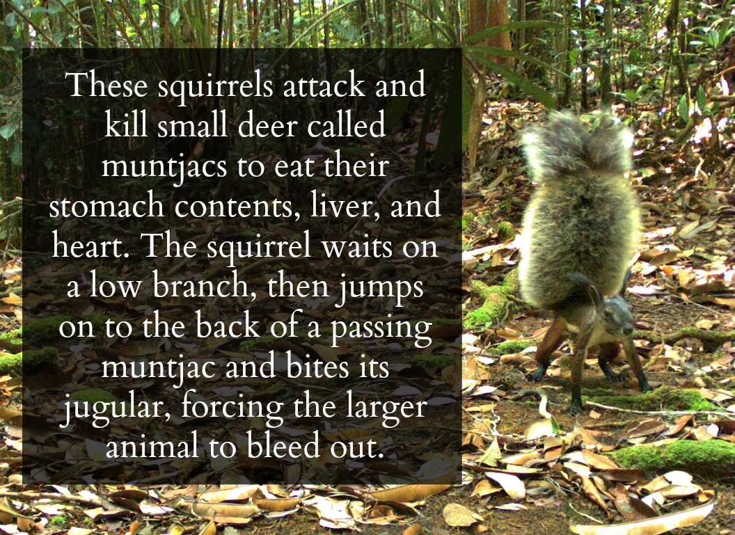 An Amazing Gallery of Science Fun Facts - Animals & Nature Gallery
