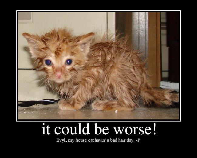 Evyl, my house cat havin' a bad hair day. -P