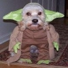 These pets look adorable in their halloween costumes!