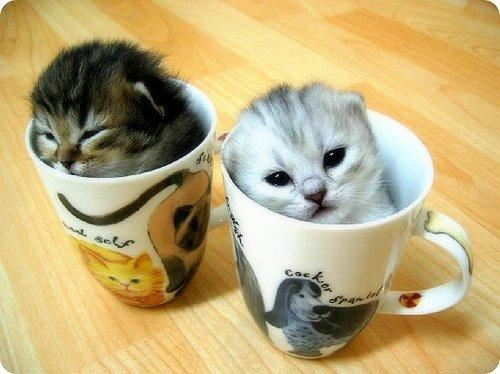 two catz. two cupz. you decide.