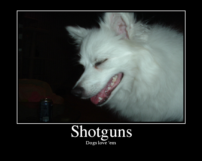 Dogs love 'em