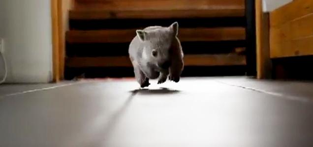 Cutest 4 Second Video Ever Video Ebaum S World
