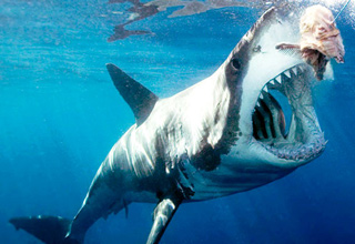 These sharks will destroy you!