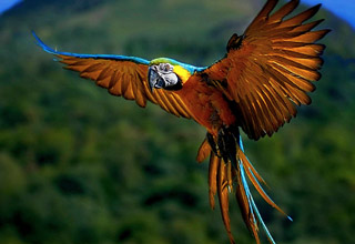 Cool and colorful birds.