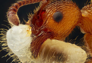 These pictures reveal the fascinating world of the very small!