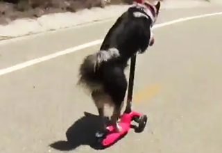 This Dog Does Stunts You Can't Do!