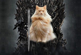 <p>Ever notice how Game of Thrones characters look like felines?</p>