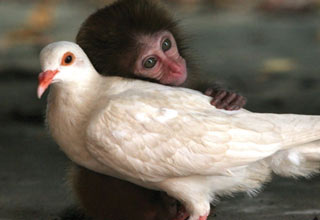 <p>Amazing friendships forged between unusual pairs of animals.</p>