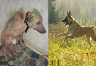 The Dogs have been left in a pitiful state, but were adopted brought back to health by good people.