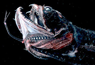 A collection of creatures from the deep dark depths of the ocean. Some look odd, others look downright terrifying!